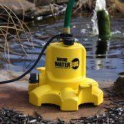 Wayne WaterBug by pond